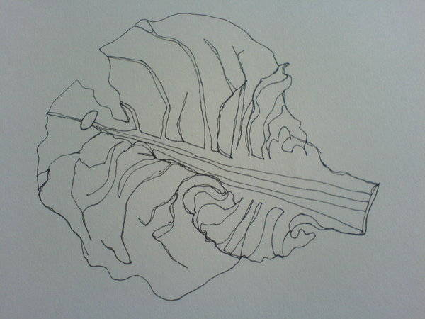 Leaf Line Drawing