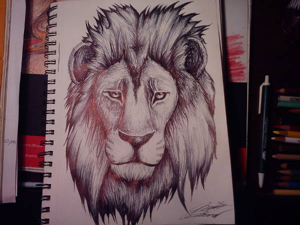 Lion Drawing Tattoo