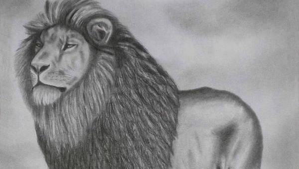 9 Lion Drawings Jpg Download