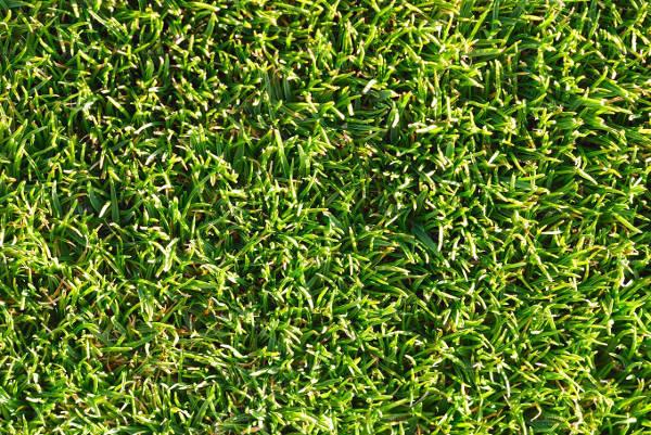 Natural Grass Texture