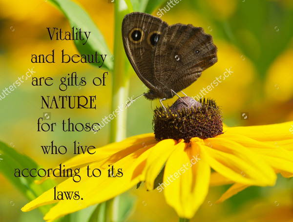 Nature Quotes Photography