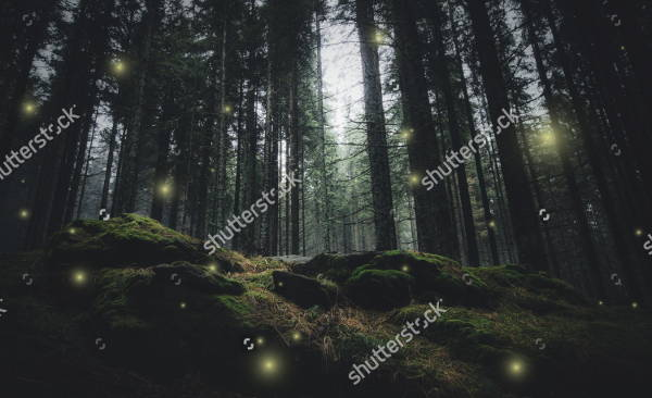 Night Nature Photography