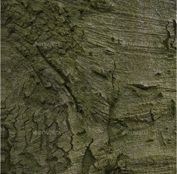 Old Wood Tree Bark Texture