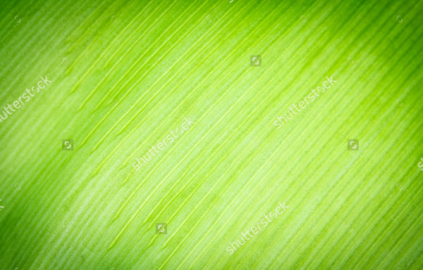 Palm Tree Leaf Texture