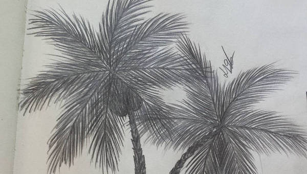 how to draw a realistic palm tree