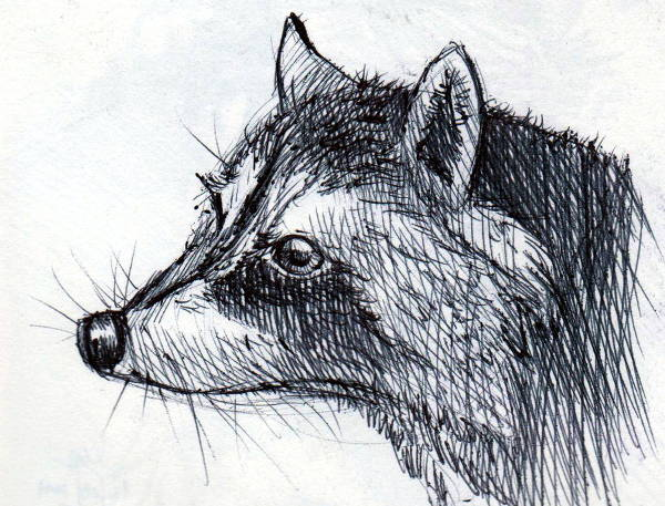 Pen Animal Drawing