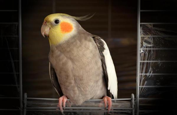 Pet Bird Photography