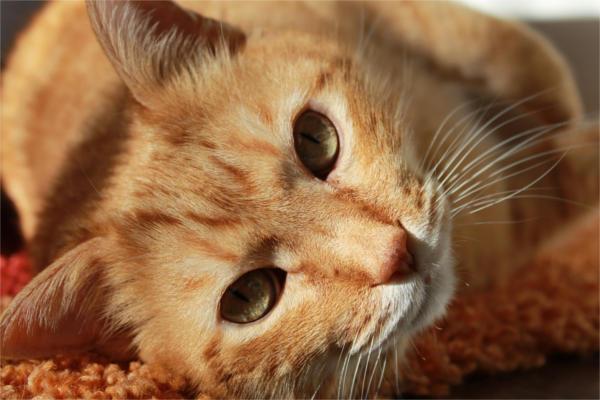 Pet Cat Photography