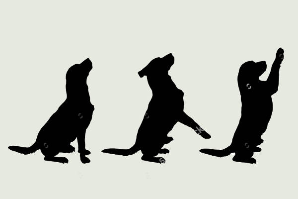 playing dog silhouette