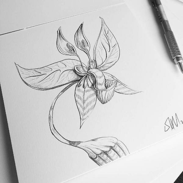 pretty flower drawing