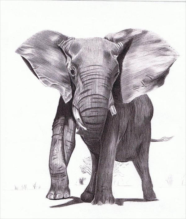 9+ Realistic Drawings - JPG Download Realistic Elephant Drawing