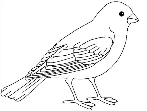 Free 20 Bird Coloring Pages In Ai