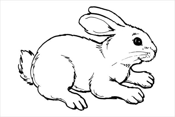 Realistic Bunny Coloring Page