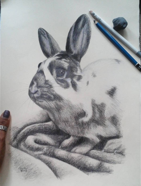 Realistic Bunny Drawing
