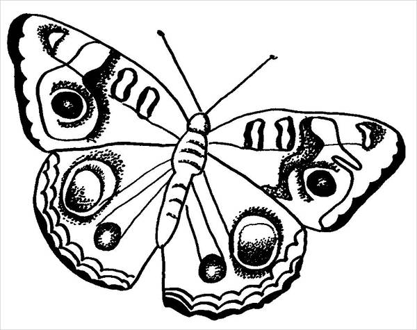 Realistic Butterfly Coloring Page