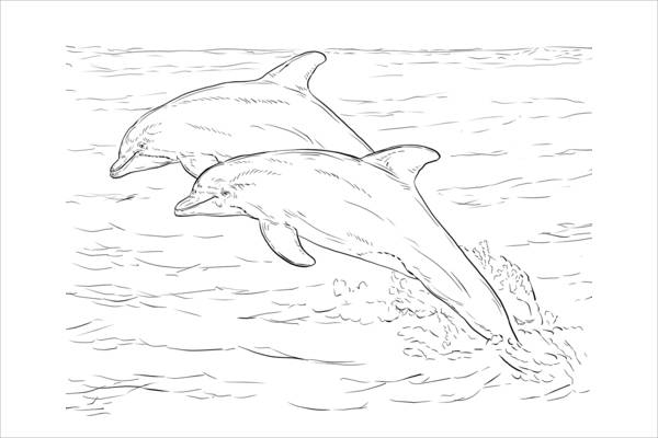Realistic Dolphin Coloring Page