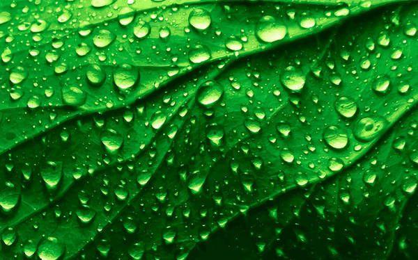 Realistic Leaf Texture