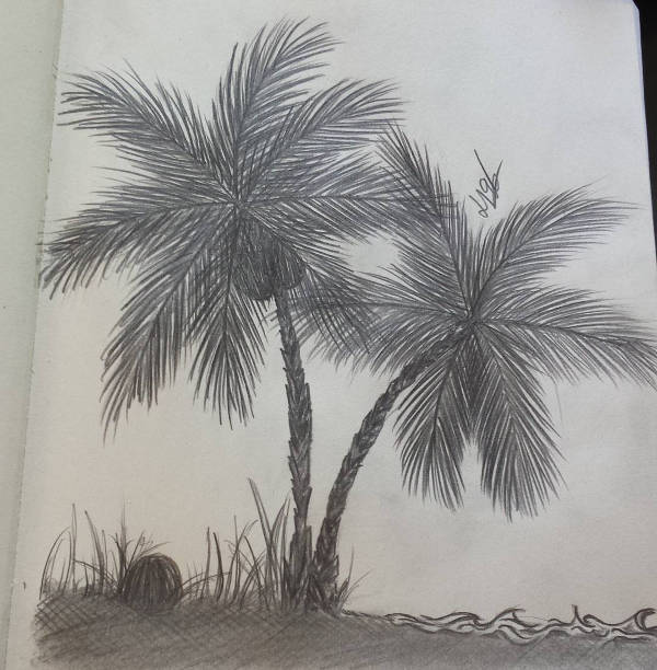 9 Palm Tree Drawings Jpg Download