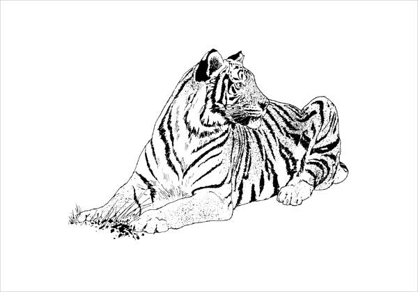 9 Tiger Coloring Pages JPG