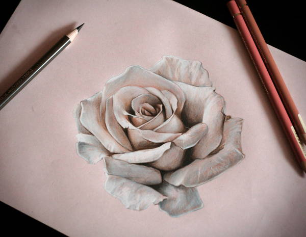 Rose Pencil Drawing