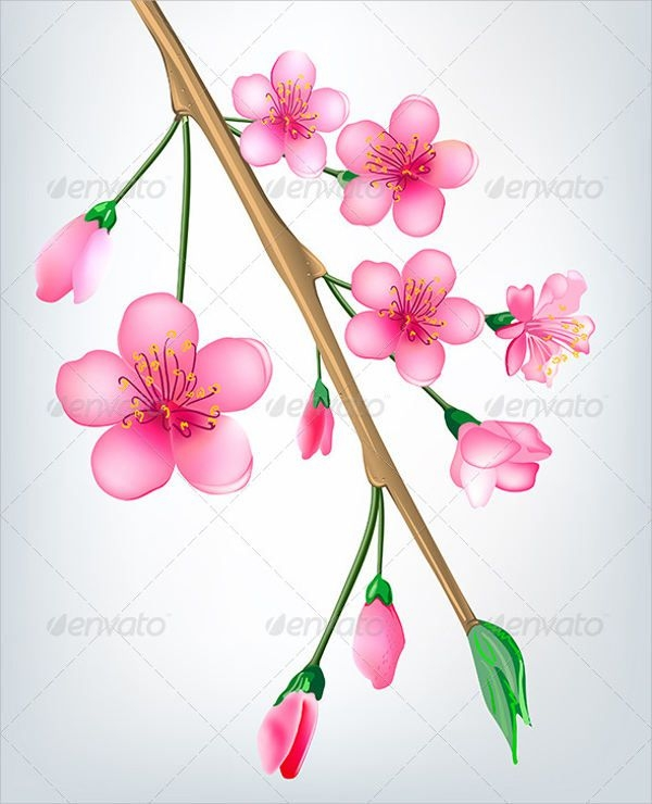 Sakura Flower Illustration