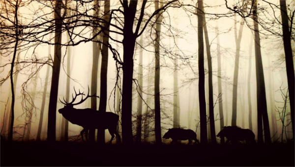 Silhouette Animals Photography