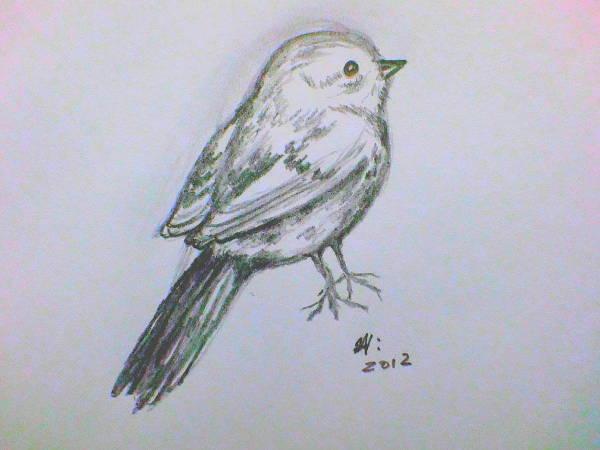 Simple Bird Drawing