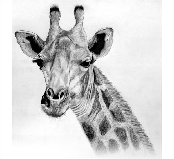 Simple Giraffe Drawing
