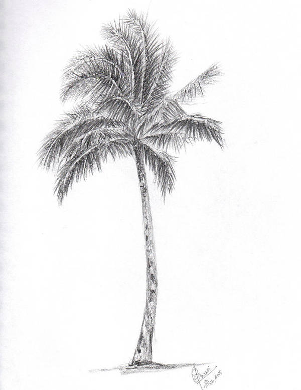 Simple Palm Tree Drawing