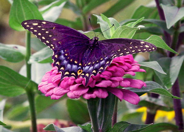 Spring Butterfly Image