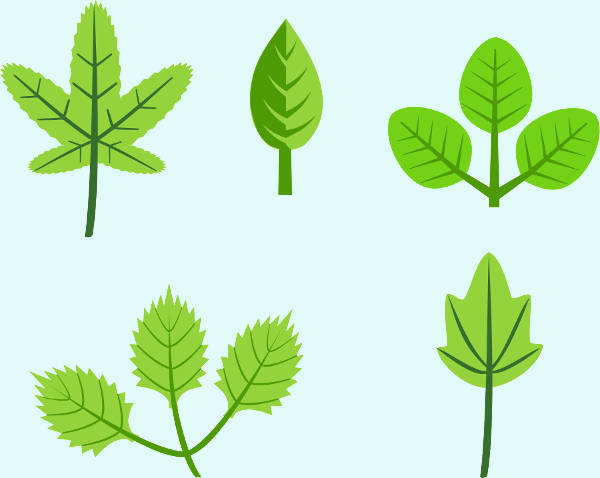 Spring Leaves Clipart