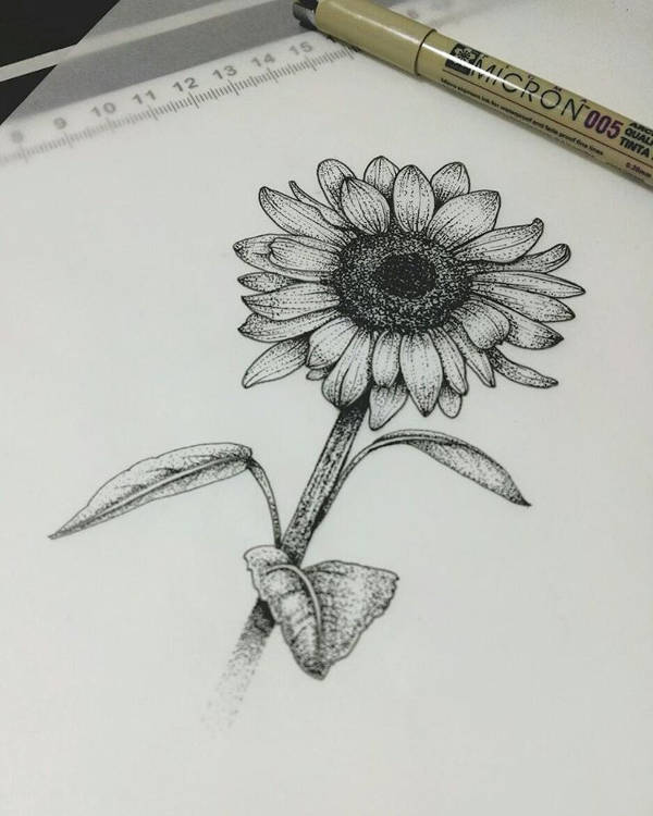Sunflower Flower Drawing
