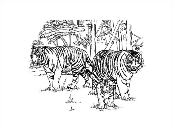 Tiger Coloring Page for Adults