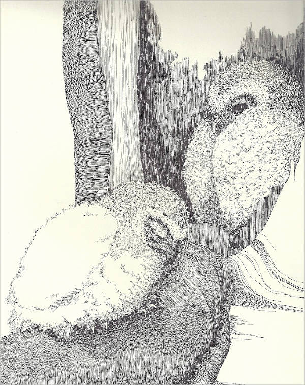 Two Baby Birds Owl Drawing