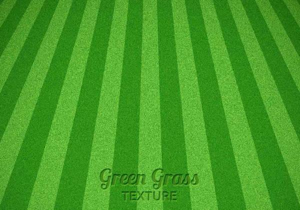 Vector Grass Texture