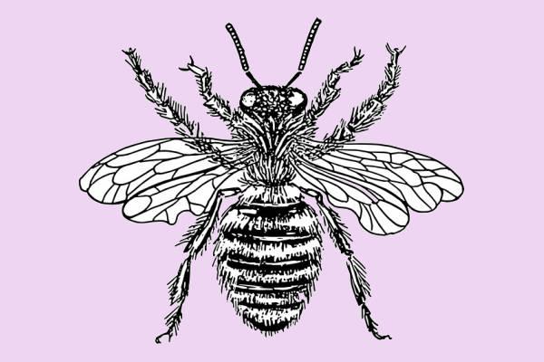 vintage bee clip art