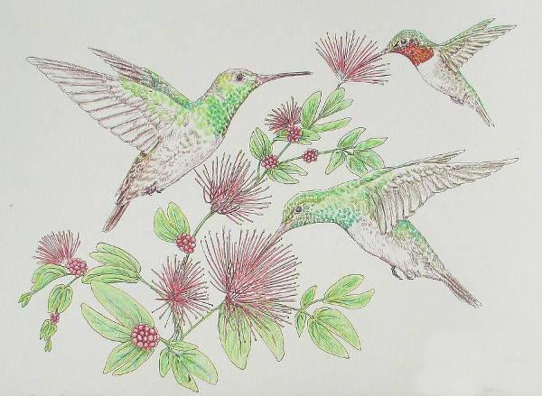 Watercolor Pencil Drawing