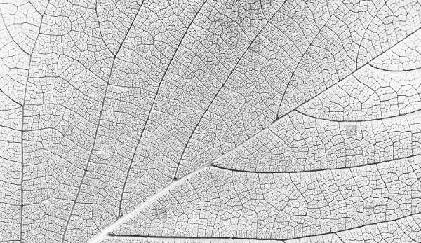 White Leaf Texture