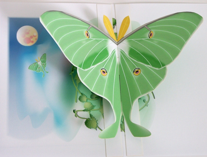 3D Luna Moth Pop Up Card